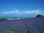 Provence-Alpes 普罗旺斯-阿尔卑斯