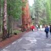 YosemiteNationalPark31-vi.jpg