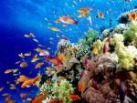 Great Barrier Reef 大堡礁